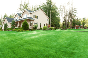 CHEMICAL-FREE LAWN CARE